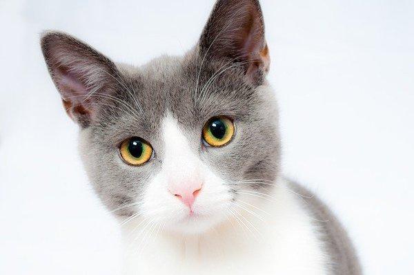 cat-1151519_640.jpg
